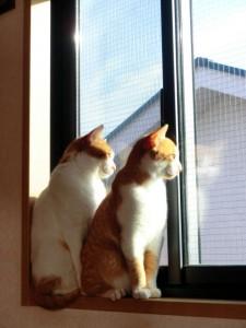窓際の猫2匹
